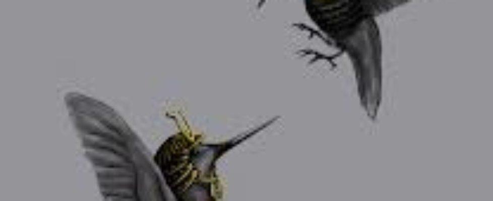 hummingbirds-2Bfighting.jpg